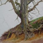 Charles James Adams 08 (Sketch of a tree with roots showing)